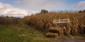 Fall Corn Mazes in the Ann Arbor Area