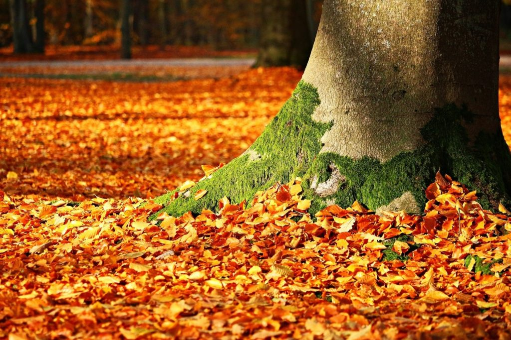 10 Autumn Upkeep Tips Photo of Fall Leaves
