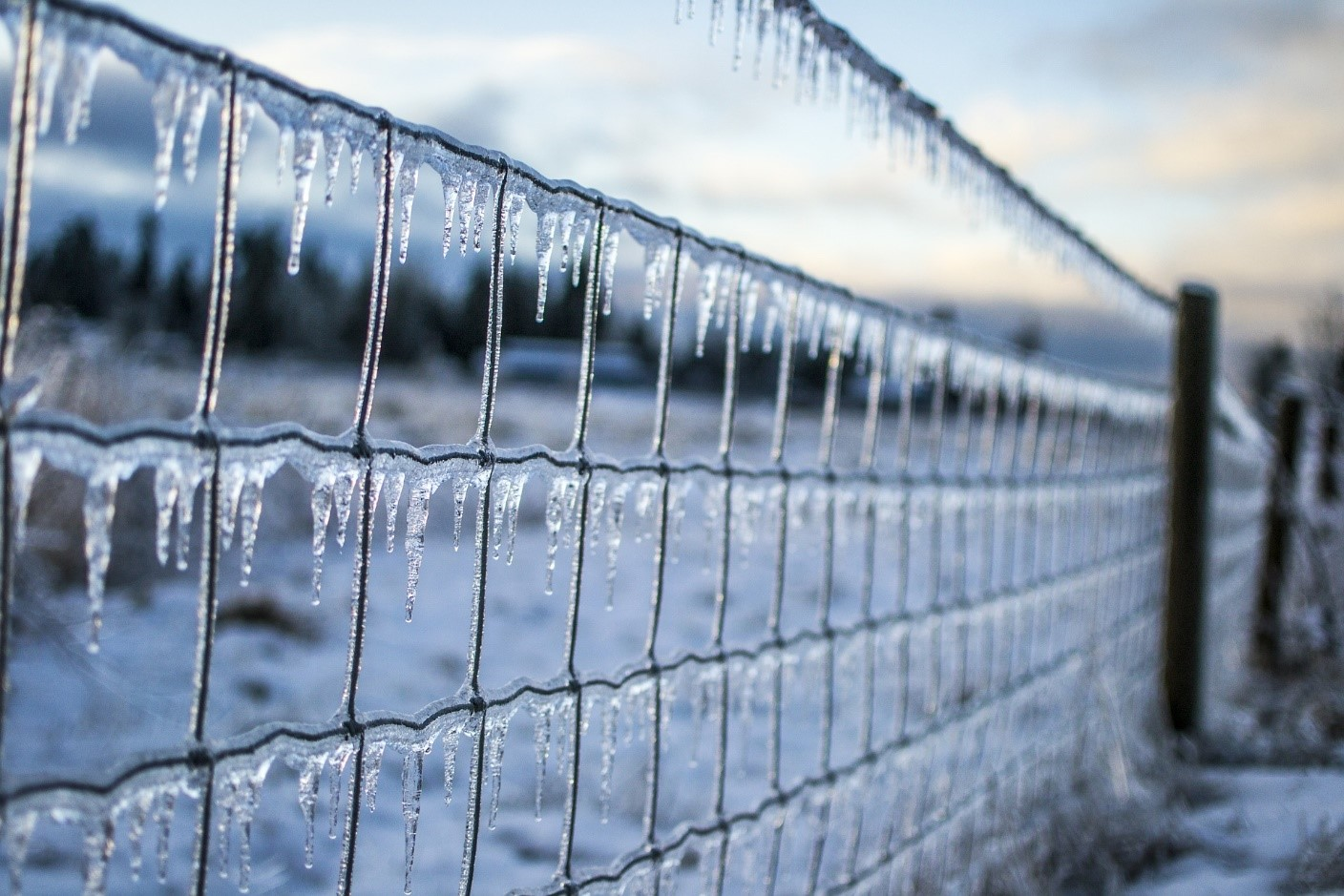 Frozen Fence Waiting for Spring to Come